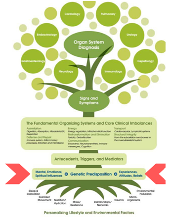 Chart for Organ System Diagnosis